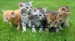 great cats insurance in malaysia