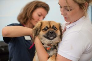 Why Microchipping Is Important For Your Pets And Dogs