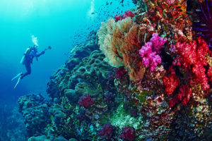 Best Countries For A Scuba Thailand