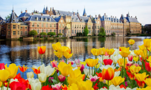 You Need To Know About The Netherlands Flower